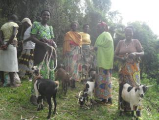 Goats and porridge